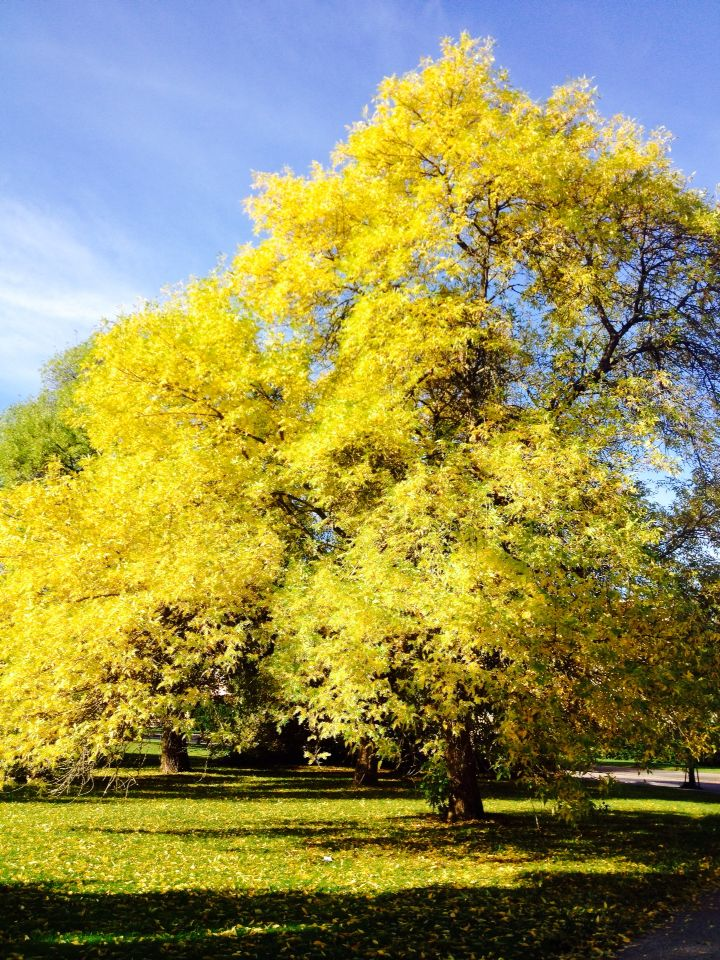 The great Yellow at Lahti, Fellmans Park, Finland