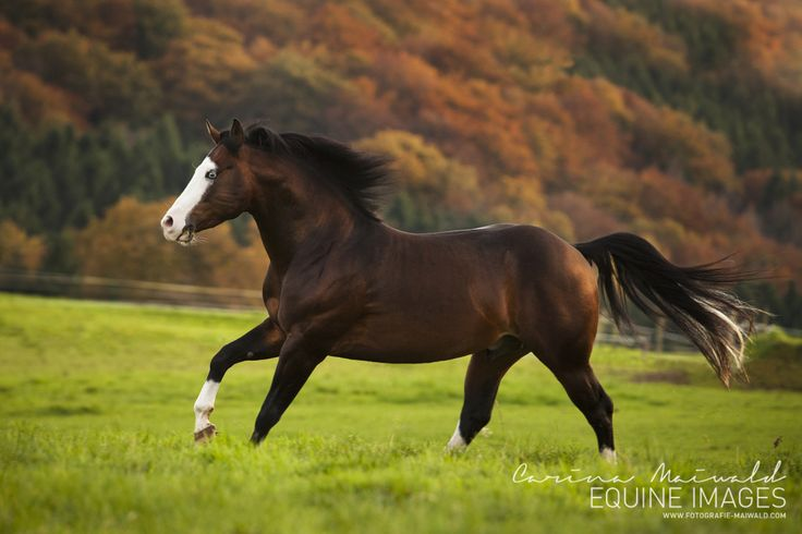 1000+ Images About Horse Pose Reference On Pinterest