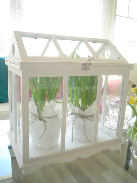 Mini greenhouse...  innostumisia.blogspot.com