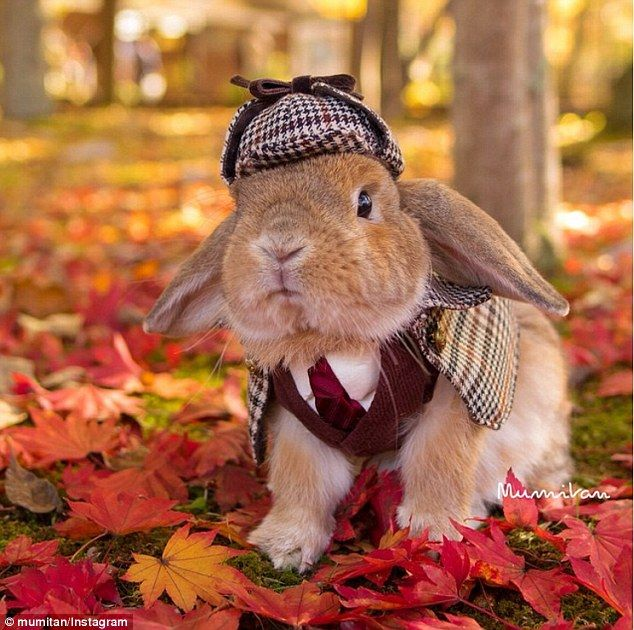Detective bun: Snaps of PuiPui show him dressed up in an array of creative costumes - from Sherlock-inspired get-ups (pictured) to a corporate look complete with a tie and glasses