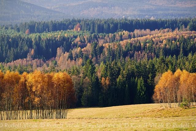 Landscape Photography    National park Šumava, Czech Republic.    Blog   Twitter   Facebook   Tumblr    JOIN ME ON Google+ or gplus.to/dolfi      create light painting Learn at: www.TakingTrickPics.com