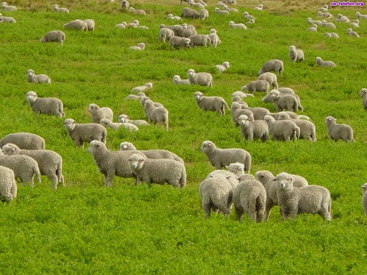 Koniecznie odwiedź: http://puszystaowca.pl/ekologiczny-wypas-owiec/