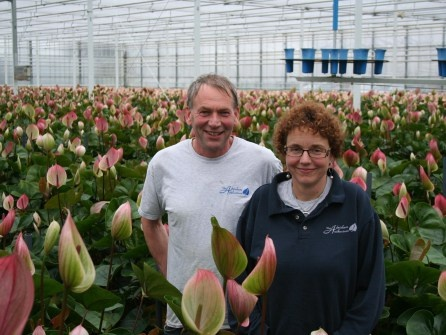 """Dertig jaar geleden teelden Jan en Jeanet van Adrichem uit Bleiswijk de roze kleinbloemige roos Motrea. Tegenwoordig telen ze snijanthuriums, onder meer de opvallende Peruzzi. De verbinding tussen toen en nu ligt in de productkwaliteit. Toen teelden ze de beste rozen van de veiling. Ook nu is een goed product het uitgangspunt van het bedrijf. """"We proberen netjes te werken, want we willen graag een mooie doos afleveren."""""""