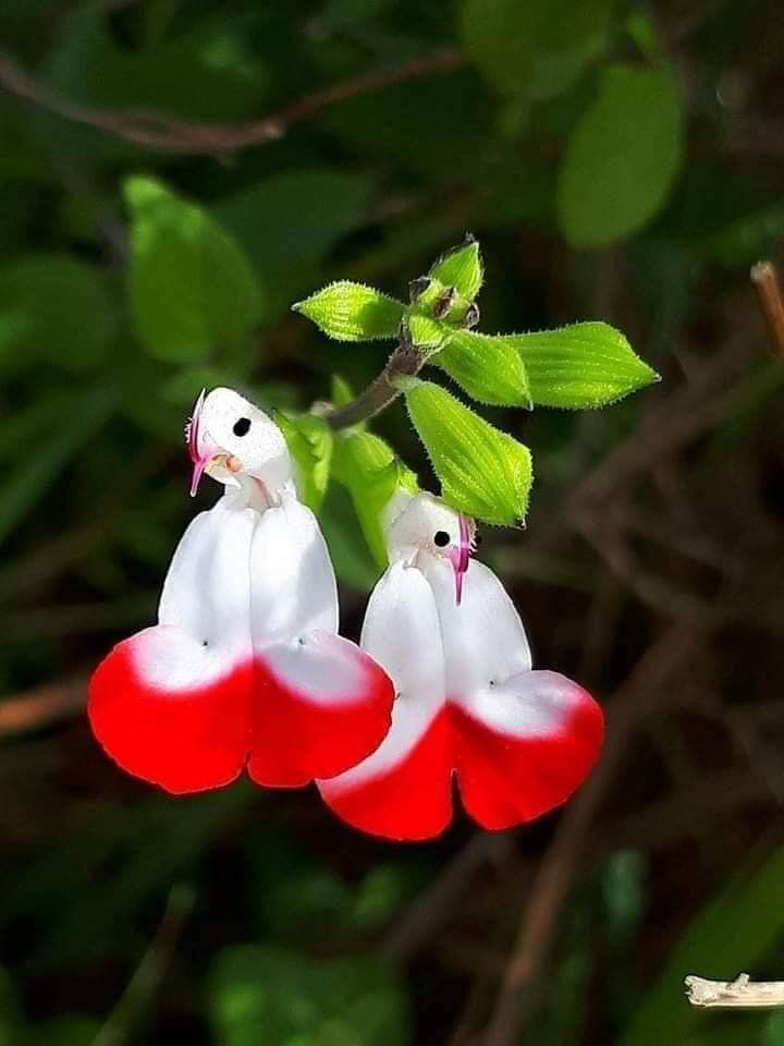 Strange N Beautiful Flowers Nature Is Incredible 2020 Tropik