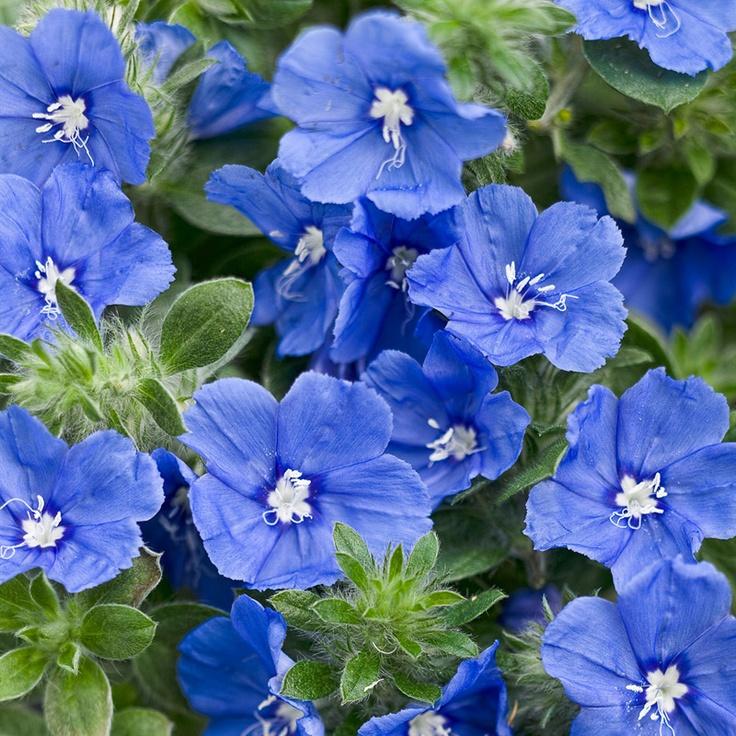 146 Best Flowers For Florida Garden Images On Pinterest Flower Gardening And Nature