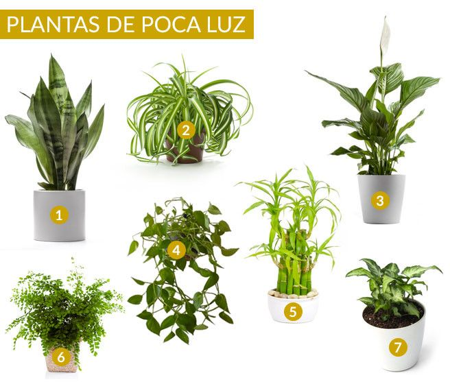 Plantas de interior que requieren poca luz                              …