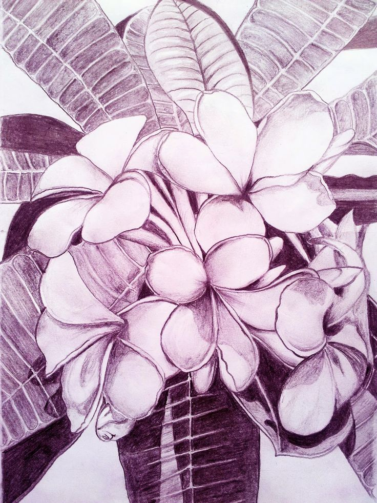 FLOWERS , PENCIL DRAWING