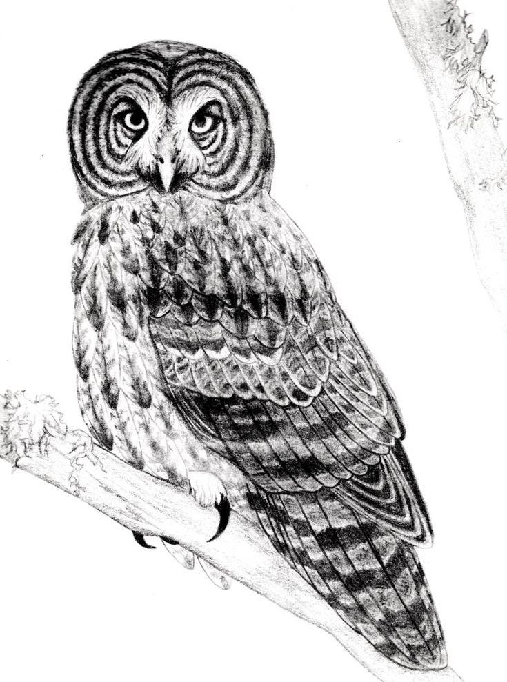 owl outline printable