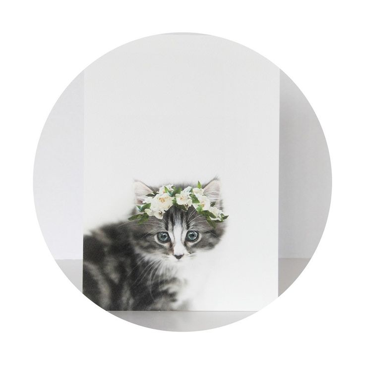 Kitten print by Isla & Olive. A4. Gorgeous for a nursery or older children's bedrooms. Available at www.lovefromfriday.co.nz