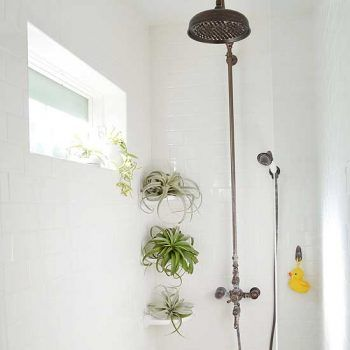 Tillandsias    As seen in the picture below, this variety of plants loves humidity so much that they can be grown in the shower! They're known for purifying the air, and literally require no work whatsoever