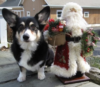 Christmas dog: Charms Corgi, Christmas Corgi, Christmas Dog, Things Corgi