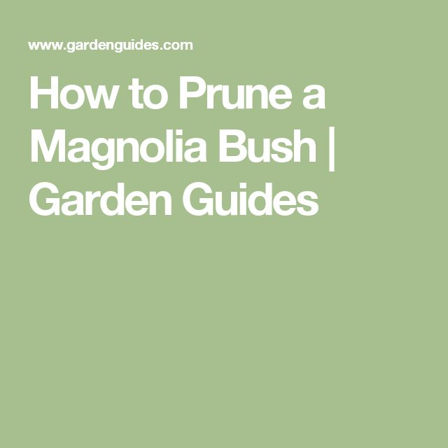 How to Prune a Magnolia Bush | Garden Guides