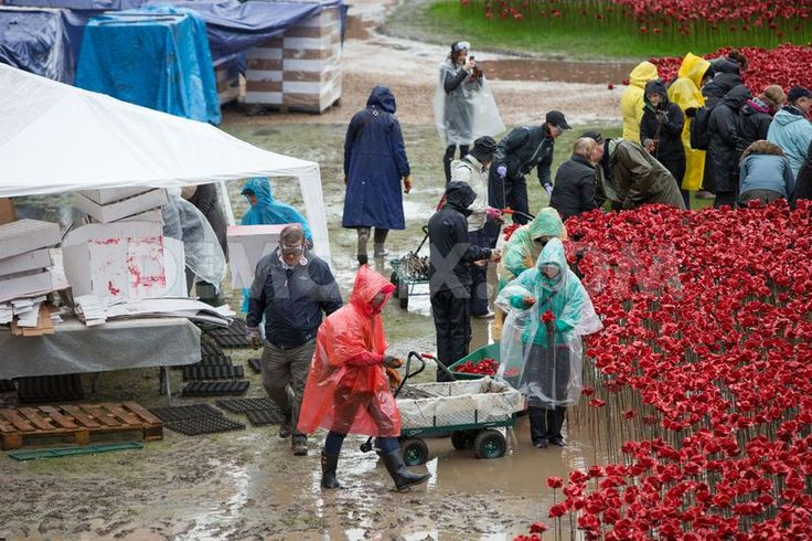 Dismantling the Tower Poppies in the moat of the Tower of London