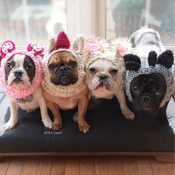 The Mia Squad, aka French Bulldogs ; }