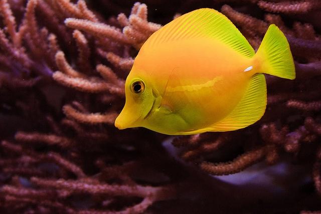 Peces, peces y peces by Carlos Caicedo, via Flickr