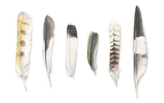 Feathers of Australian Birds Original Watercolour Painting