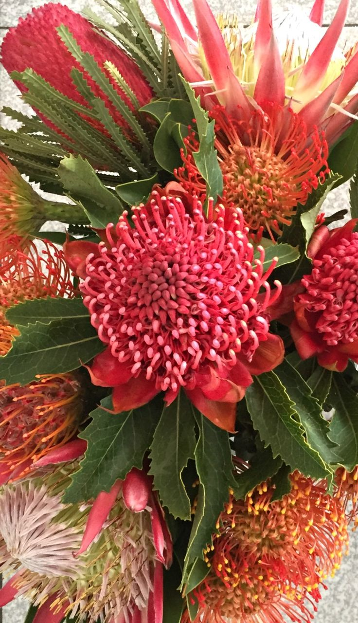 #Waratah #Proteas amongst others filling the #workshop with #colour .  #Flowers