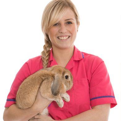 Veterinary Nursing Level 2 Course - The Course Mix