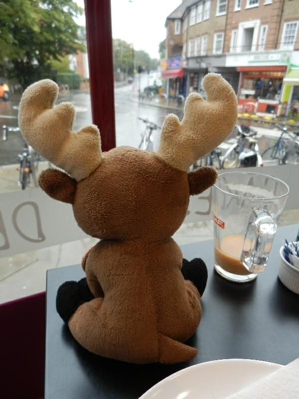 Mr. Moose having breakfast in a café in Acton Town, London. Next to him - an Earl Grey with milk, almost gone.