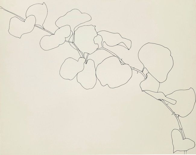 Zaira - Ellsworth Kelly's Plant Drawings at the Met - The New York Times