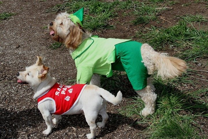 Elf Boy and Santa Paws dog costumes