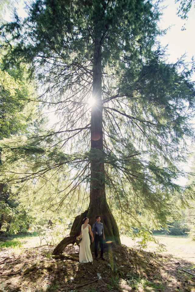 Three Leaf Photography | Abbotsford Chilliwack Langley Wedding Photographers - Bride and groom under large tree