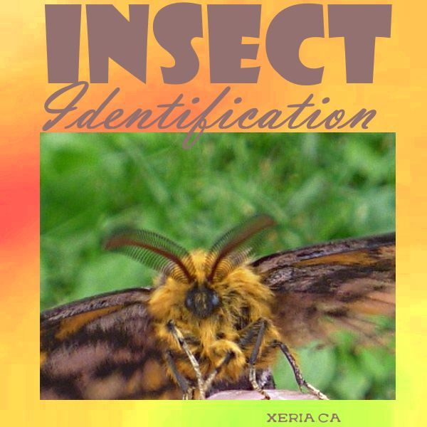 Insect Identification - learn how to identify the bugs in your xeric garden