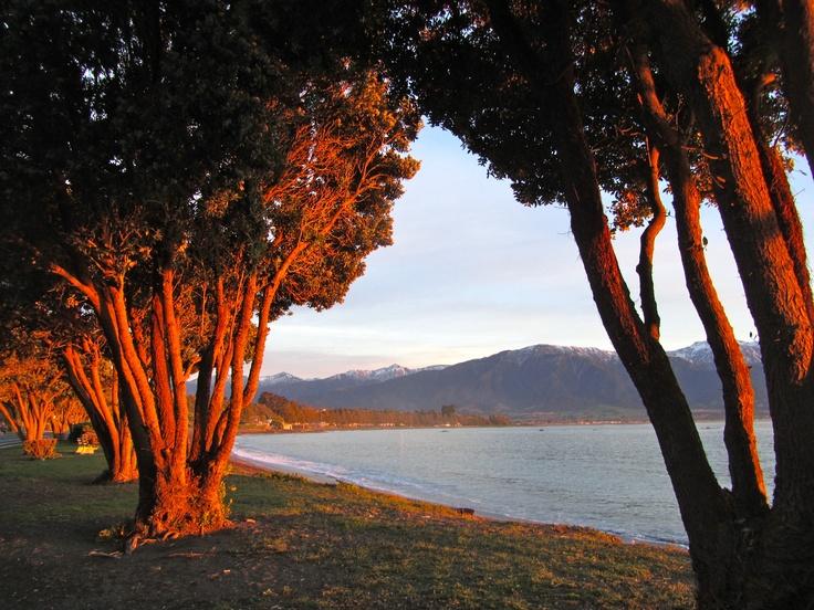 Kaikora - sunset lights up the trees
