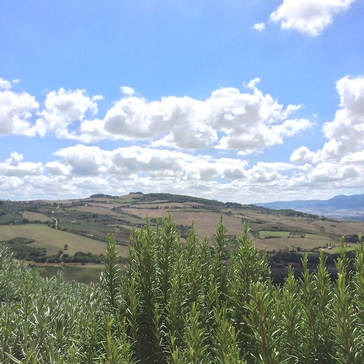 Beautiful view of the Val d'Orcia