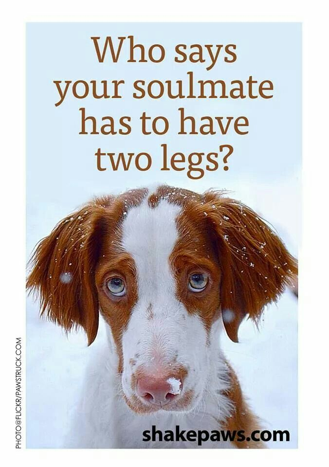 Who says your soulmate has to have two legs?