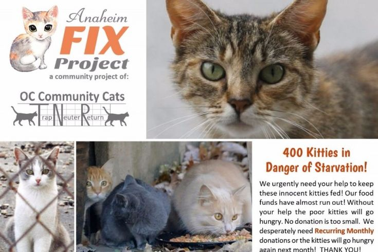 Oct. 12, 2016- 400 Kitties are at Risk of Starvation! Emergency Funds are Needed to Keep the Kitties Alive!  400 stray and abandoned Kitties depend on the all-volunteer group, Anaheim Fix Project/ OC Community Cats for their food every day!   Emergency vet bills for sick and injured kitties have drained their funds and they now don't have enough  left to provide food to the volunteer feeders who care for these approx 400 innocent kitties!  These are sweet stray cats who are spayed/neutered…