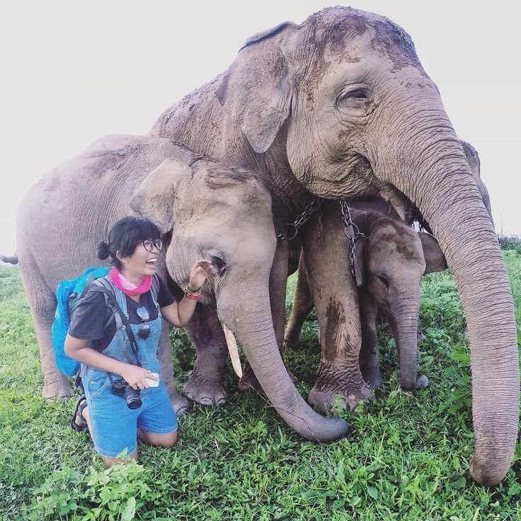 """""""Bermain bersama gajah-gajah gemas di Way Kambas  .  Bisa melihat gajah sedekat ini dan main sama belalainya itu super menyenangkan! .  Cerita…"""""""