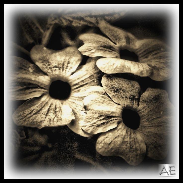 Flowers by AngelEowyn