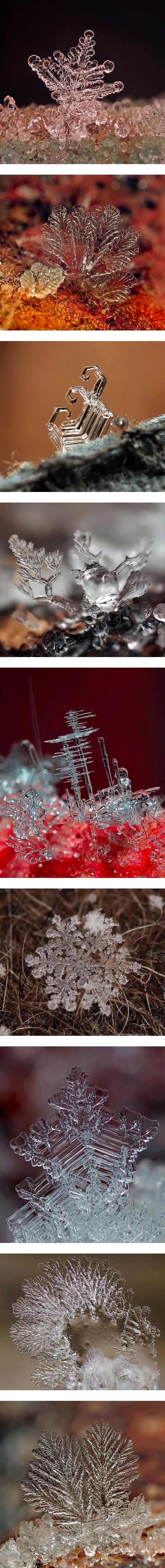Macro photographs of snowflakes - Andrew Osokin