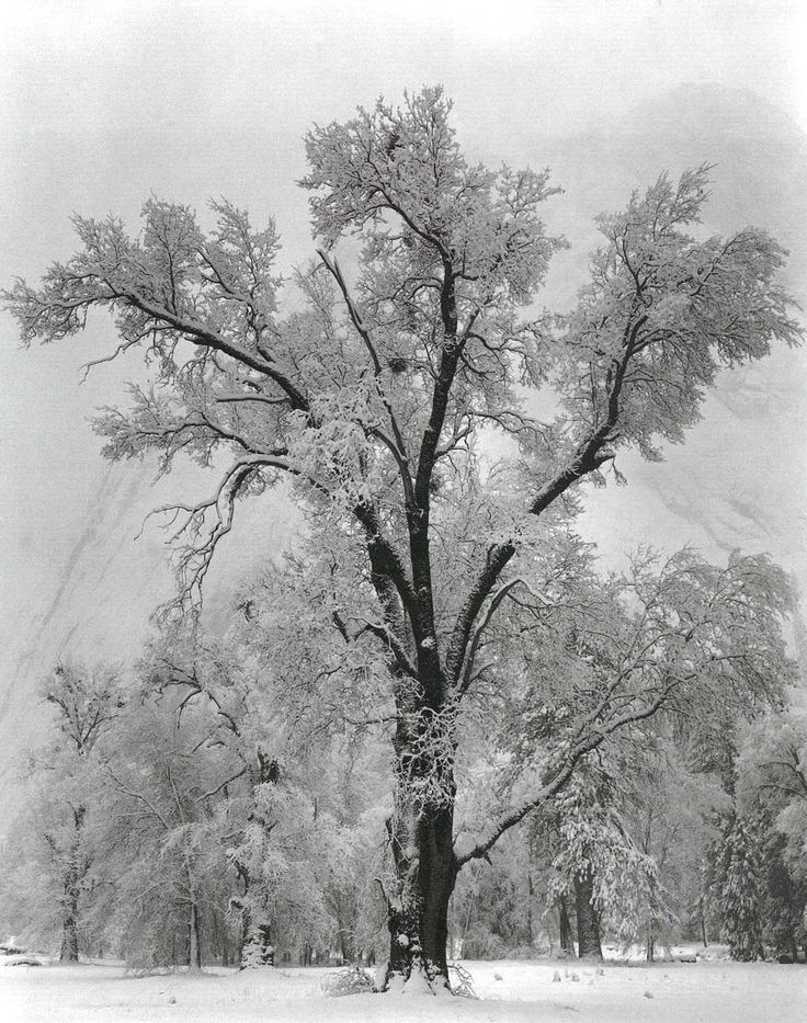 Ansel Adams worked with my mother. My mother was a beautiful photographer. Black and white photography really stands out to me, personally. I feel like it shows the world for how it really is.