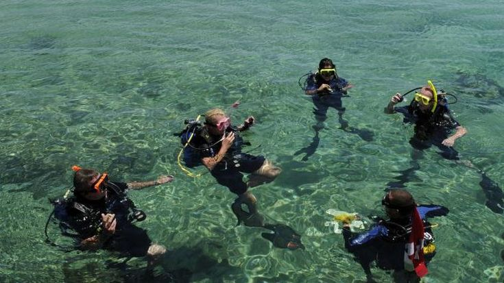 Want to try diving? Take a short course and an actual SCUBA dive with a licensed instructor.