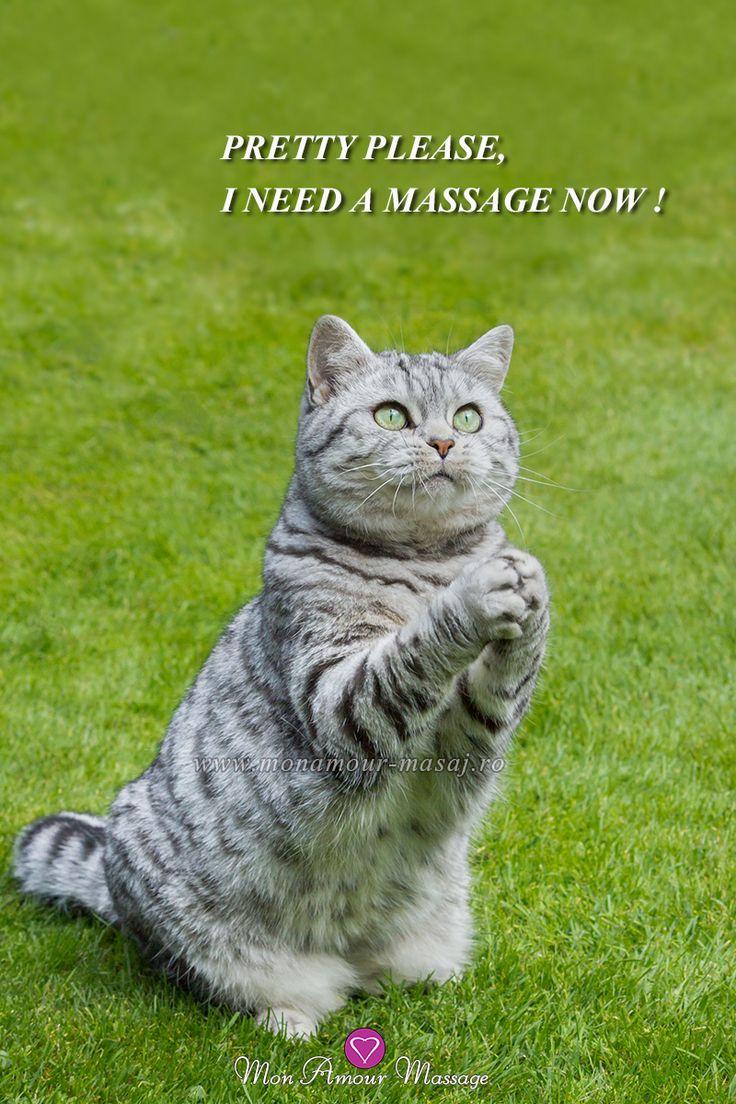 """""""Te rog frumos, am nevoie de un masaj acum !"""" Desigur motănelule, Adela, Ana, Anais, Antonia, Delia, Giulia, Izabela, Maya și Sofia te așteaptă acum la Mon Amour Massage pentru a te răsfăța într-o ședință fierbinte de masaj erotic body to body. SUNĂ-NE ACUM: 0732 889 966 !"""