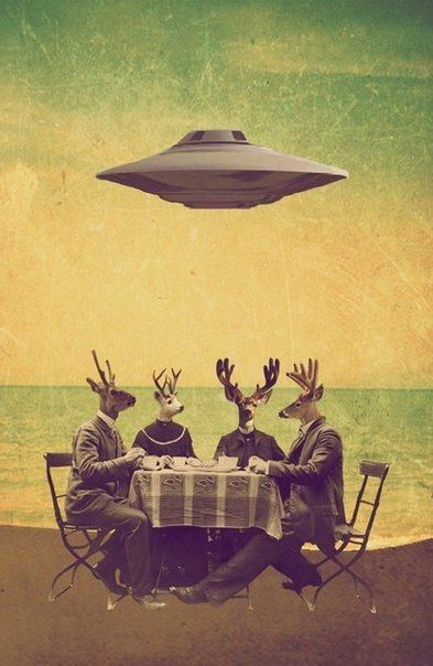 Reindeer dinner with UFO - the norm