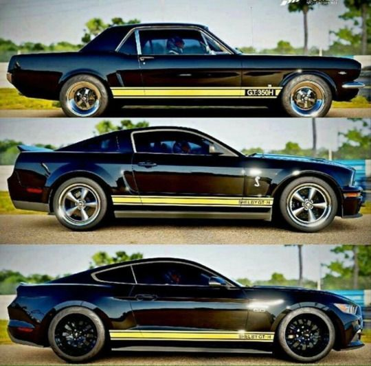 Hertz edition Shelby Ford Mustang GT-350H throughout the years