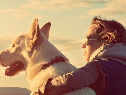 Descripcion:. La raza ovejero alemán es la más popular de la Argentina y una de las más populares del mundo. Su reputación se debe a varios factores. Uno de ellos es que el perro de raza ovejero alemán presenta una gran capacidad para el...