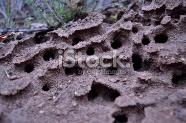 termites nest Royalty Free Stock Photo