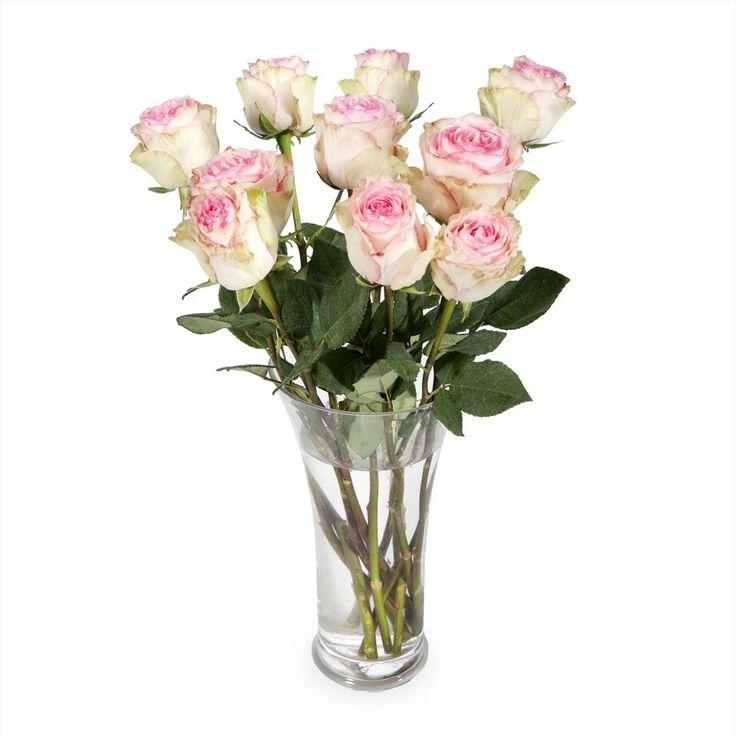 Esperance Speciality Roses