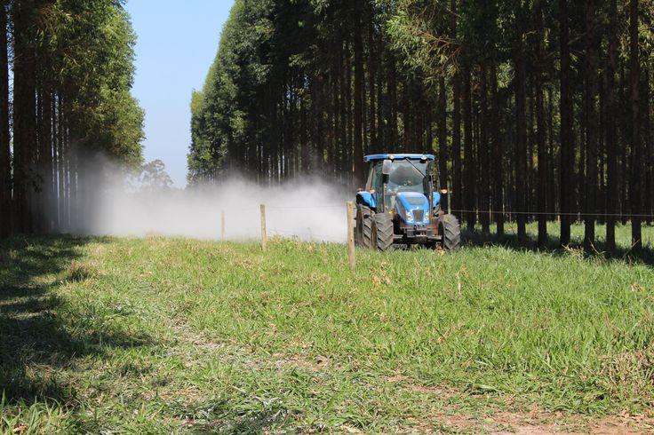 Acompanhe aqui a cobertura do setor Agrosilvipastoril e reprodução de reportagens com dicas de manejo, tecnologias e inovações no setor. ILPF e assuntos