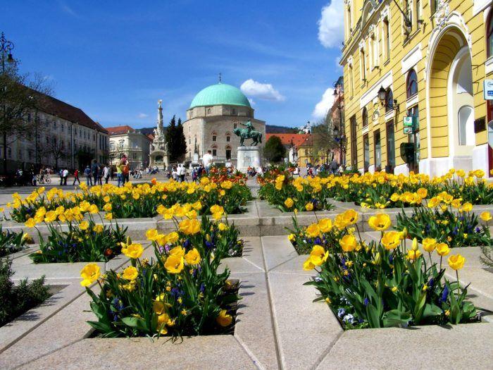 Pecs Tulips in Széchenyi Square