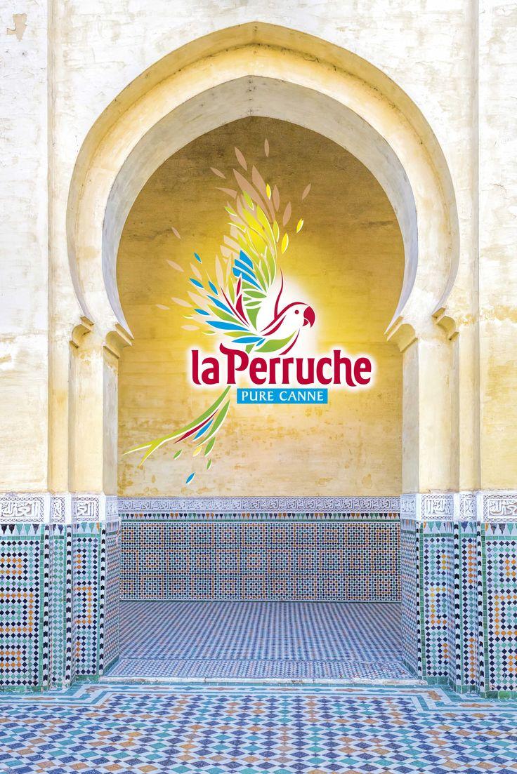 Les 74 meilleures images propos de la perruche autour du for La fenetre san jose