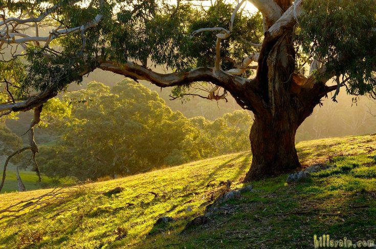 Autumn afternoon sun near Meadows SA. Photo by HillsRain.com