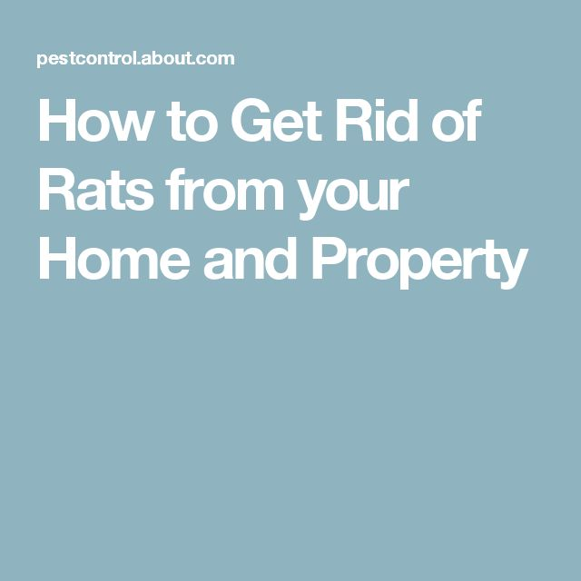 How to Get Rid of Rats from your Home and Property