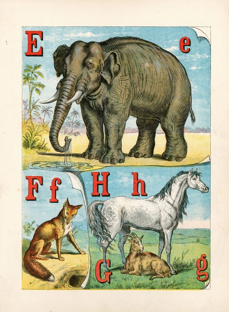 :: The Alphabet of Animals ::: Legs Animal, Illustration, Elephants Love