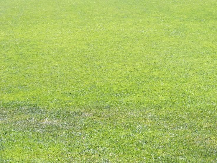 green green grass, Cannery Row, CA