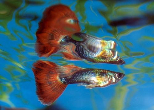 1000 ideas about cheap fish tanks on pinterest plastic for Easy to care for fish